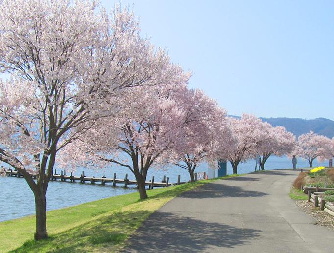諏訪湖畔と桜並木の横を通る遊歩道。春には満開の桜を見ながらのお散歩がおすすめ。